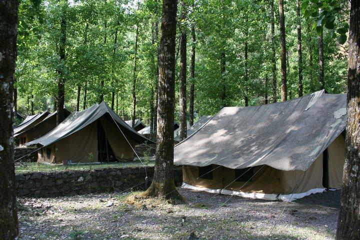 Jungel Camp