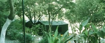 Eco Wild Camps Rajaji Photos