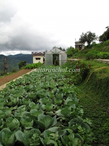 Trishul Orchard Resort Photos