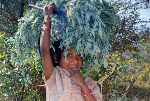 service female uttarakhand