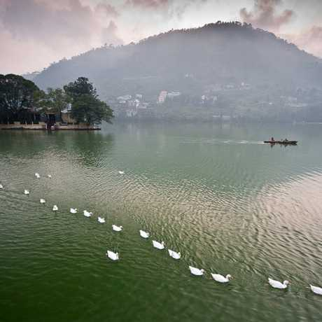 Swans lined up in Bhimtal - amazing view