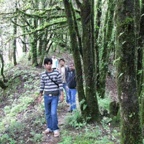 The jungle trek - inside Binsar Wildlife Sanctuary