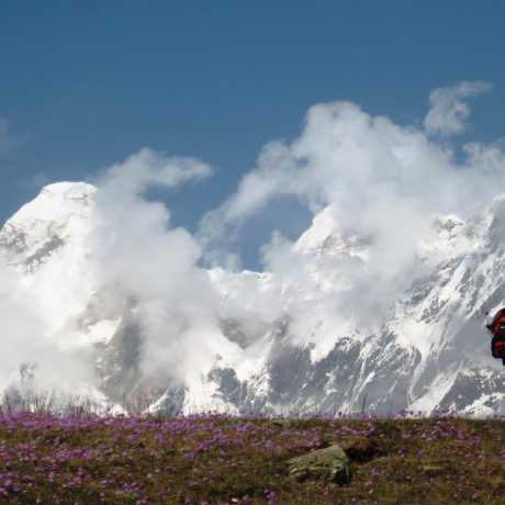 Scenic view of snow capped mountains and flowers in Nandadevi East Base Camp, Munsyari