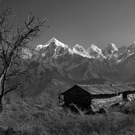 An abandon hut and Panchchuli peaks in the backdrop as seem from Munsiyari.