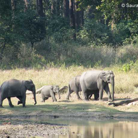This pic was taken in the Chilla Range of Rajaji Tiger Reserve. Small herd of elephants was roaming in the forest. Particular thing about this pic was the clear visibility of the calf as elephants are very protective about their young ones.