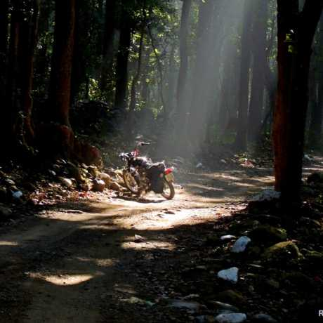 Riding through dense forests around Corbett National Park suddenly you find God throwing his light for a perfect pose. 