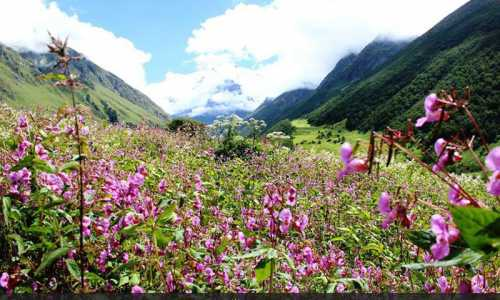 Valley Of Flowers Deluxe Package ex-Joshimath
