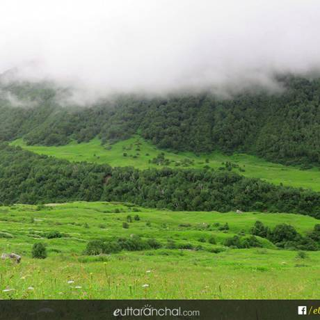 clouds engulfing the trees at valley of flowers, uttarakhand.