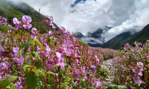 3 Nights Valley of Flowers Package (ex-Govindghat)