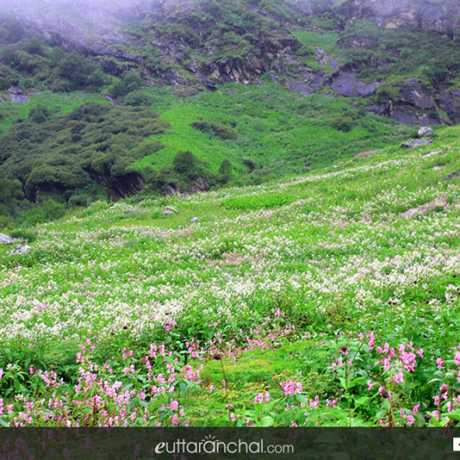 meadows of valley of flowers in Uttarakhand.