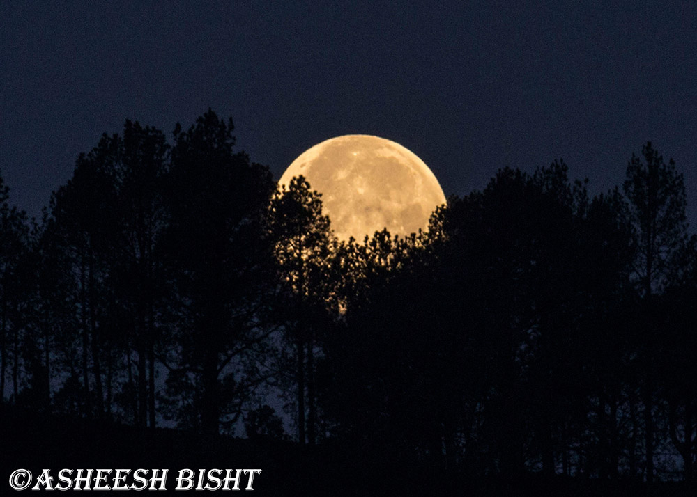 Bhimtal With Nainital Ranikhet 4 Nights Photos