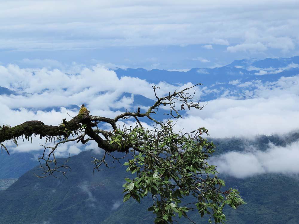 Lansdowne with Chopta Chandrashila Trekking Photos