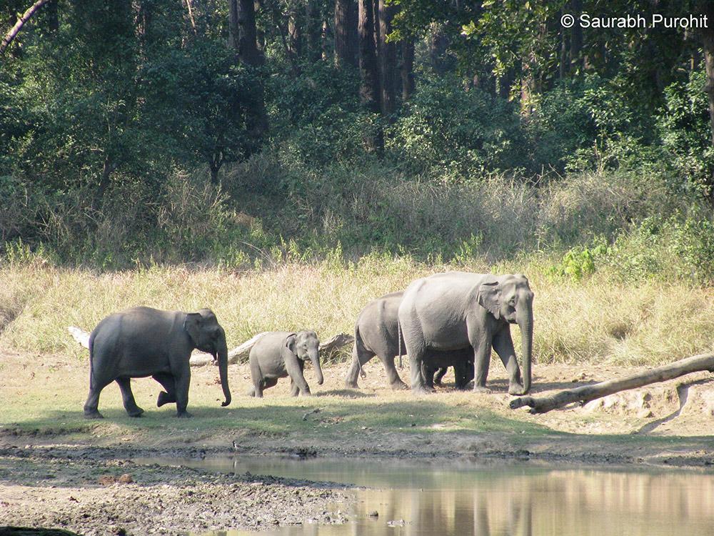 Rajaji Tiger Reserve