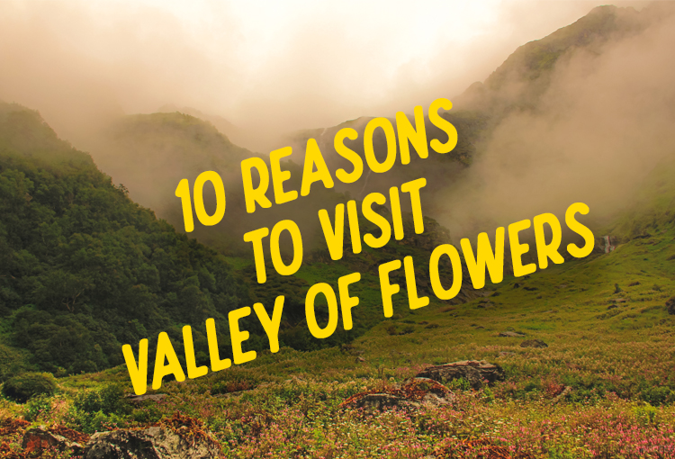 10 Reasons Why You Should Visit Valley of Flowers