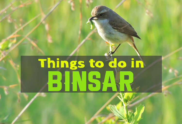 Activities In Binsar