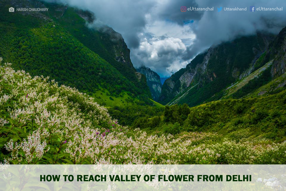How to Reach Valley of Flower From Delhi
