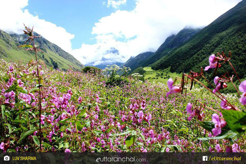 Valley of Flowers Luxury Trekking Package (ex-Joshimath) Photos