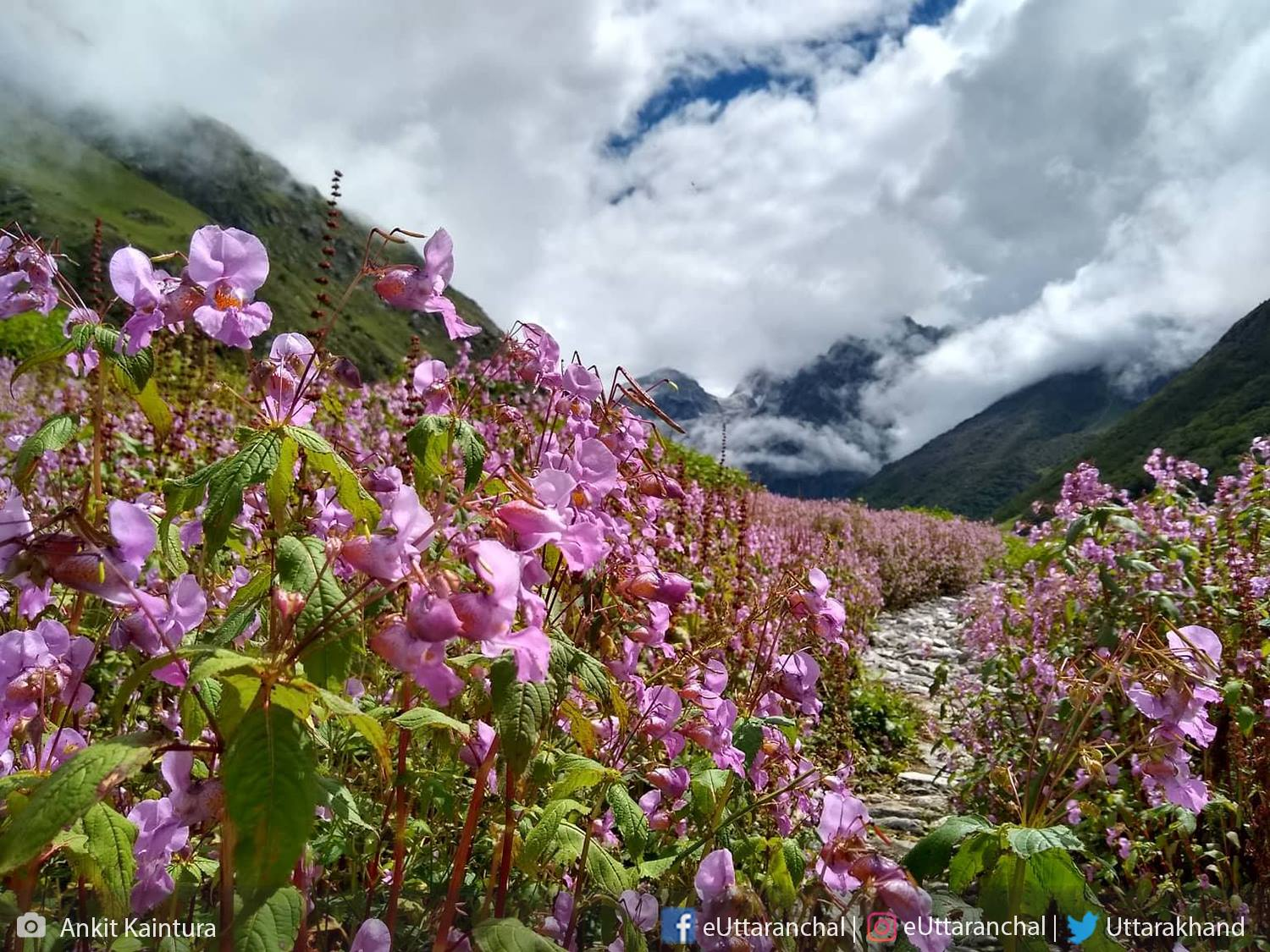 3 Nights Valley of Flowers Package (ex-Govindghat) Photos