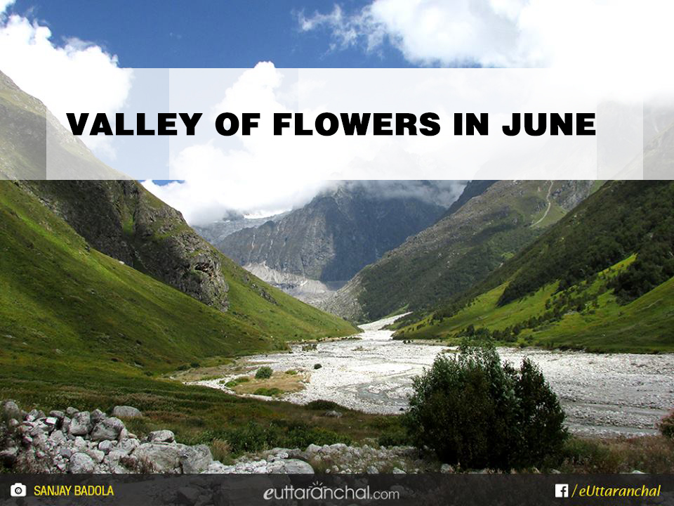 Valley of flowers in June