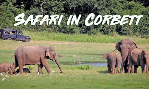 Online Jeep Safari booking for Corbett National Park