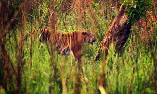 Sitabani Forest Reserve