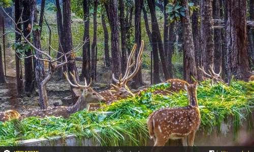 Dehradun Zoo, Malsi Deer Park