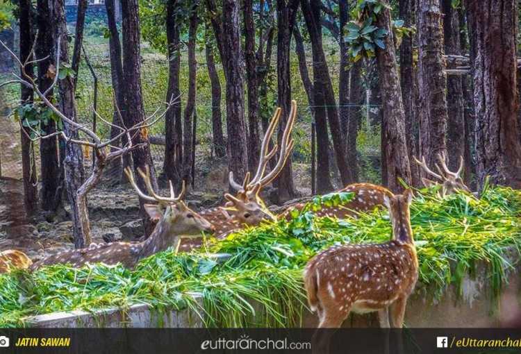 Dehradun Zoo Malsi Deer Park Car